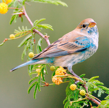 colorful bird perched on branch