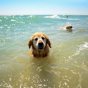 dog swimming getty