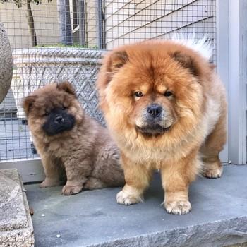 martha Stewart's dogs, empress Qin and emperor han
