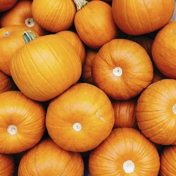 shot of a group of pumpkins