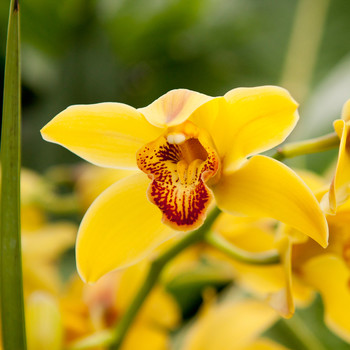 An Orchid Extravaganza Is in Bloom at the U.S. Botanic Garden Right Now