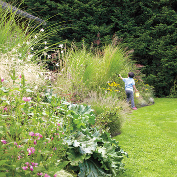 Here's Why You Should Consider Adding Ornamental Grasses to Your Landscaping