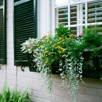 various plant types in black iron window boxes