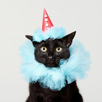 Frill Seeker: Cat Clown Halloween Costume