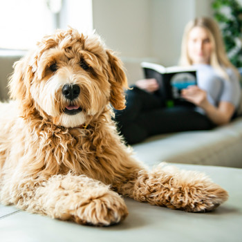 dog and owner lounging on couch