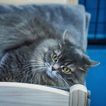 cat in Ikea bed at the Etobicoke Humane Society