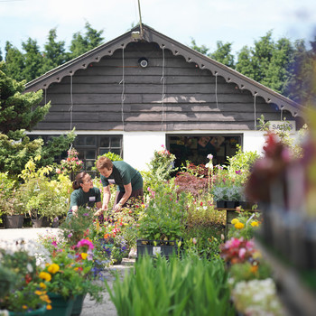 women looking at plants at garden center