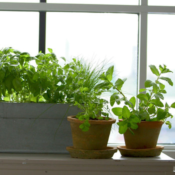 How to Grow Fresh Herbs on Your Kitchen Windowsill