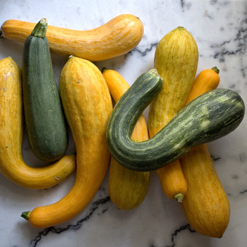 over sized green and yellow summer squash