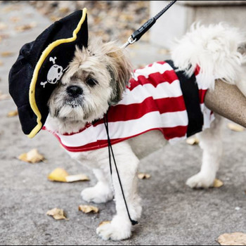 small white dog in pirate halloween costume