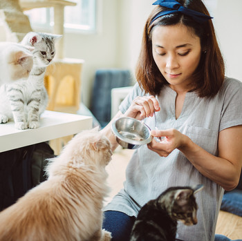 woman feeding four cats