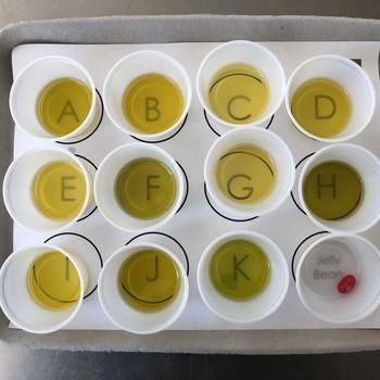gaea olive oil tasting