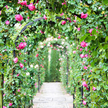 arch trellis covered pathway with climbing pink roses and vines