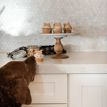 dog sniffing cupcakes