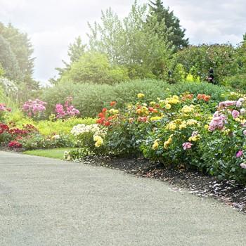 establishing shrubs