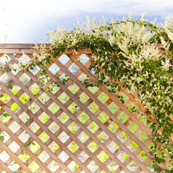 unfinished wooden garden lattice with greenery