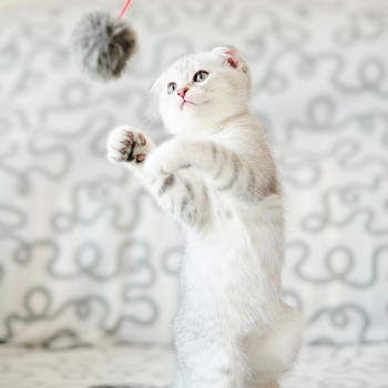 cat playing with fuzzy ball toy