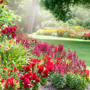 garden consisting of various red flowers and greenery