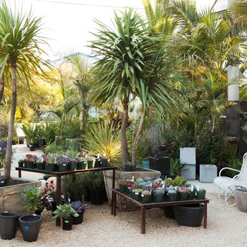 Finding the Perfect Plant: The Secrets of Shopping a Nursery