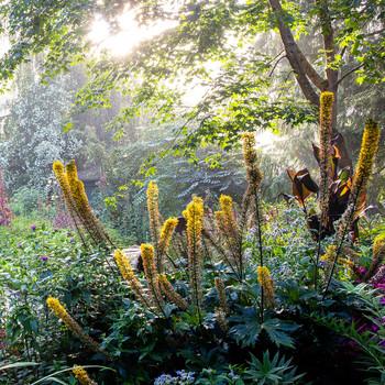 view of heronswood garden