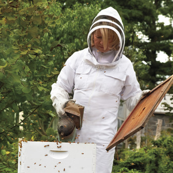 Hive Five! Bees Now Protected on the Endangered Species List