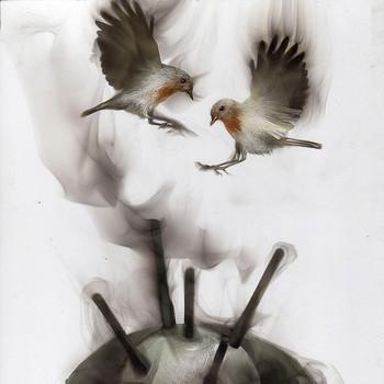 Steven Spazuk fumage birds
