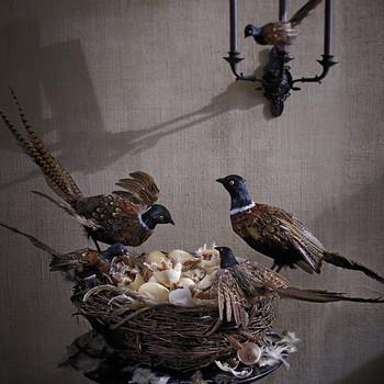 Scary Bird's Nest Candy Dish