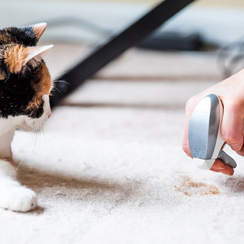 cat carpet stain