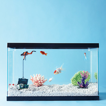 Ask Martha: Advice for First-Time Fish Owners