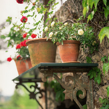 potted roses outdoor shelf