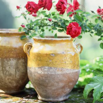 garden antique pot