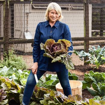 Martha Stewart in Her Cabbage Patch