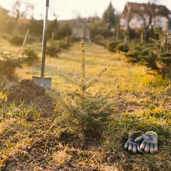 gloves and shovel at christmas tree farm