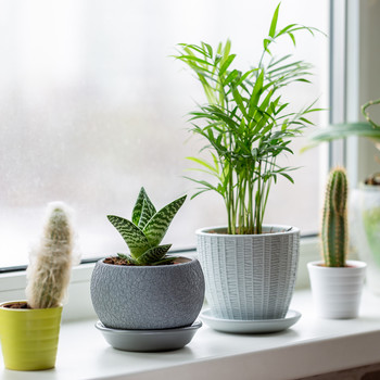 winter houseplants on sill