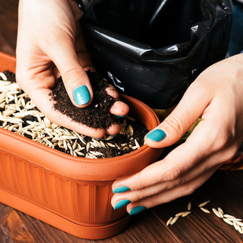 womans hands with a bright manicure sprinkle seeds and soil