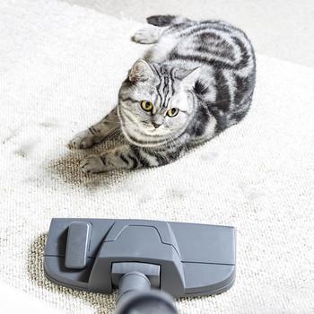 cat on carpet watching vacuum