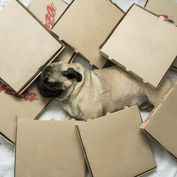 dog sleeping surrounded by pizza boxes