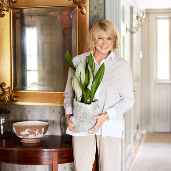 martha holding plant in front of faux bois wall