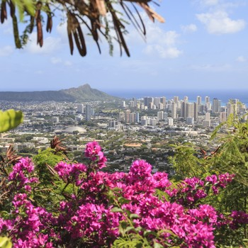 View in Hawaii of flowers and buildings