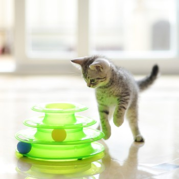 kitten playing a game