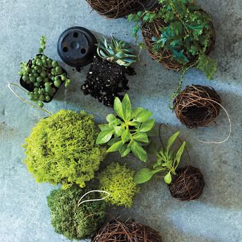 Moss Ornaments