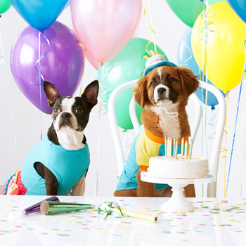Throw Your Pet a Howling-Good Birthday Party
