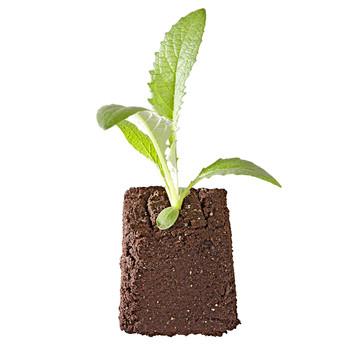 soil block plant grow