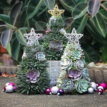 three succulent christmas tree designs