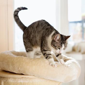 cat kneading cushion