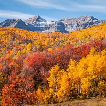 Mountain over trees of fall foliage