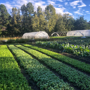 garden rows of crops with greenhouse farming