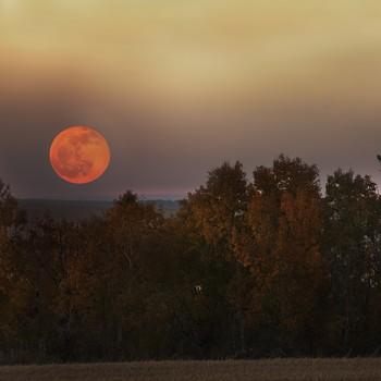 Full moon above autumn trees