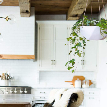 hanging flowerpot in kitchen