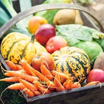 vegetables in garden